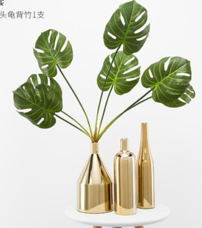 黑龙江龟背竹